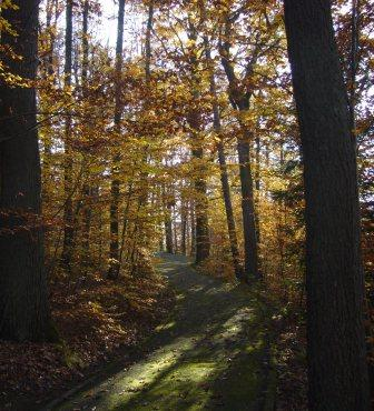 Herbstwald 1web